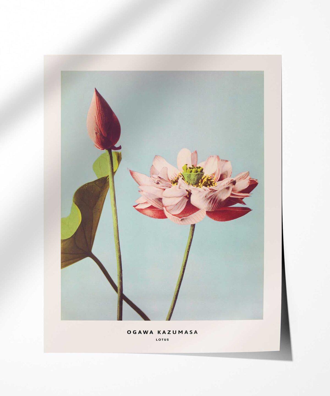 Ogawa-Kazumasa-Lotus-Poster-Photopaper-Duwart