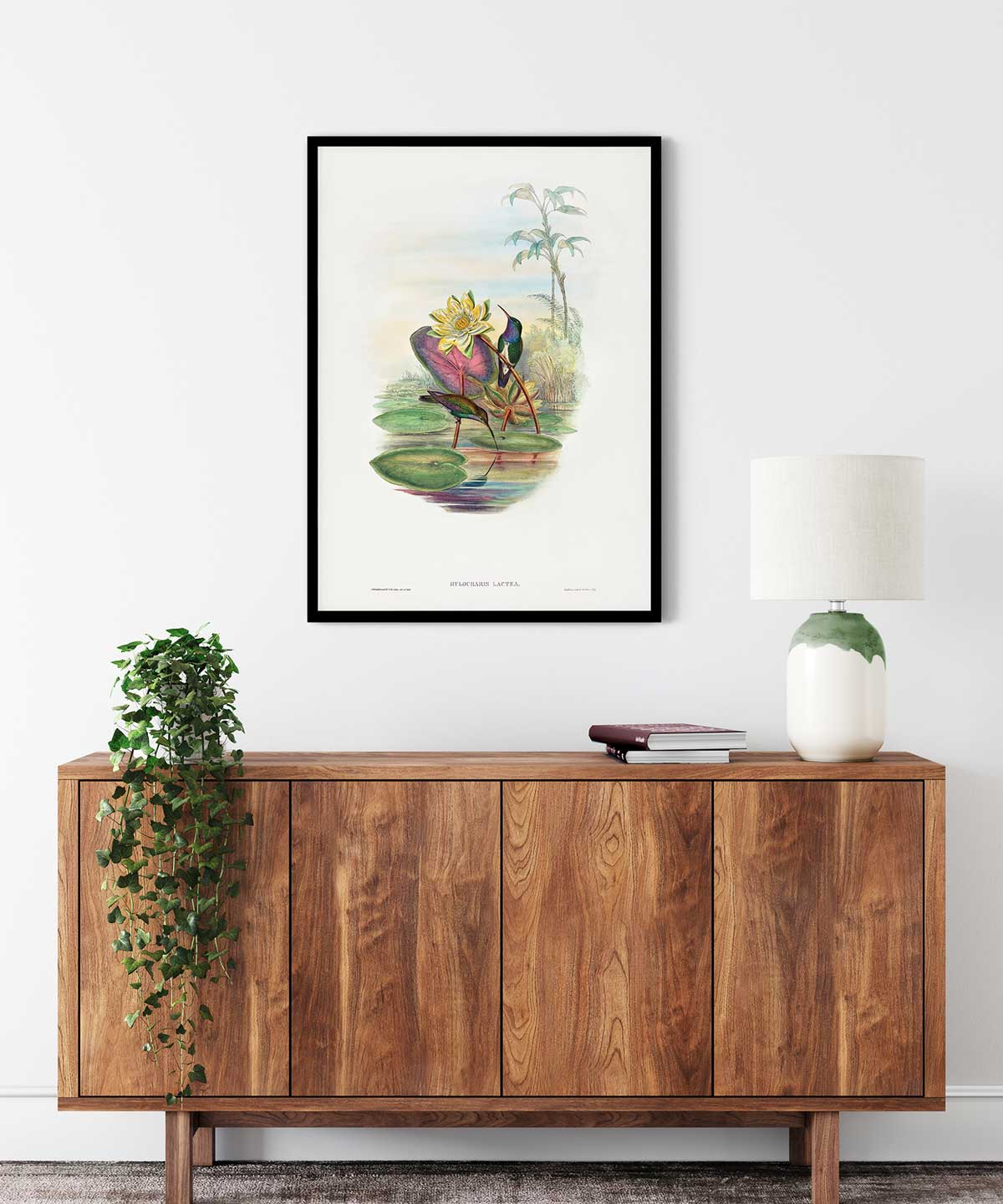 Blue-Breasted-Sapphire-Poster-Black-Framed-on-Wall-Duwart