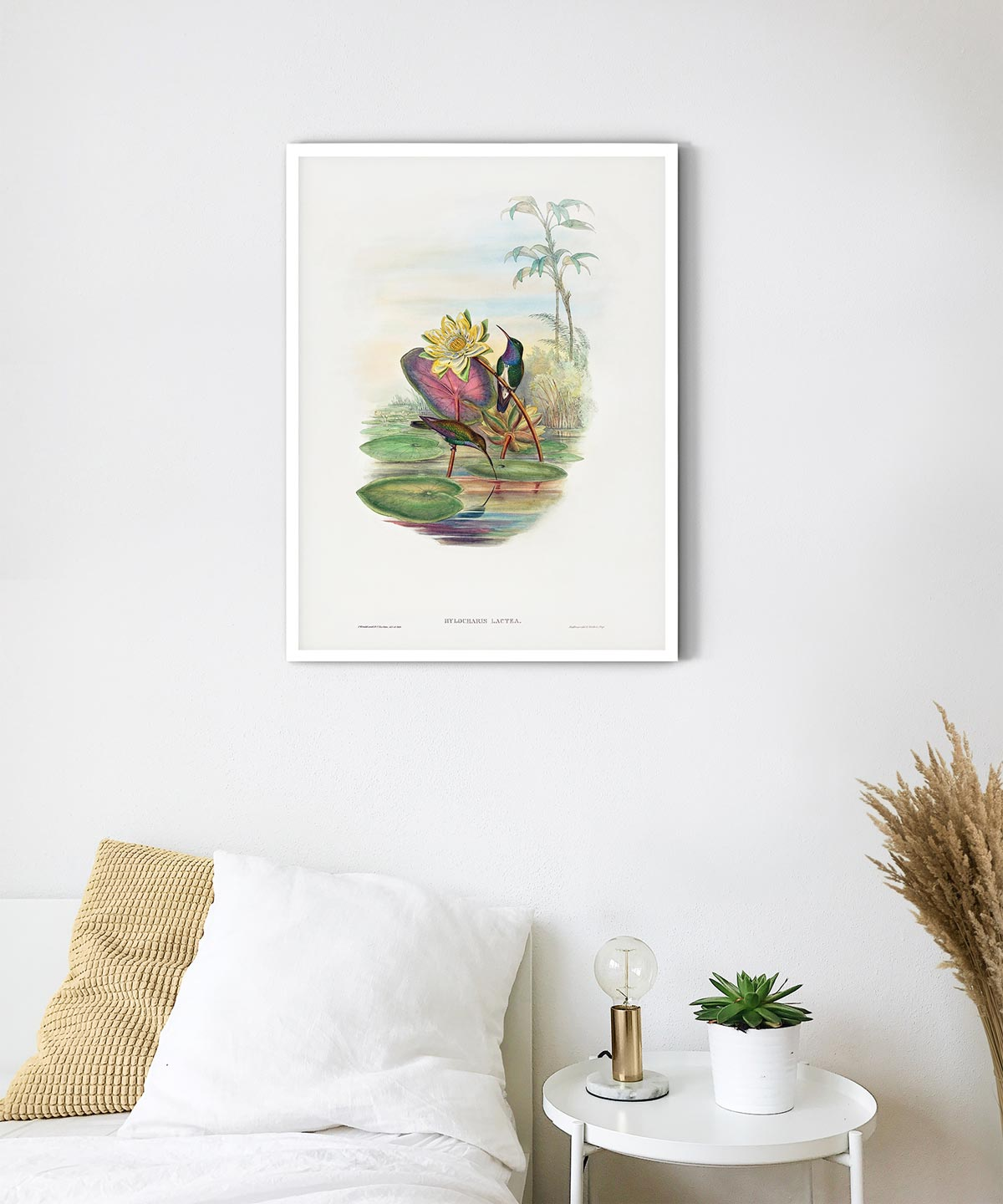 Blue-Breasted-Sapphire-Poster-White-Framed-on-Wall-Duwart