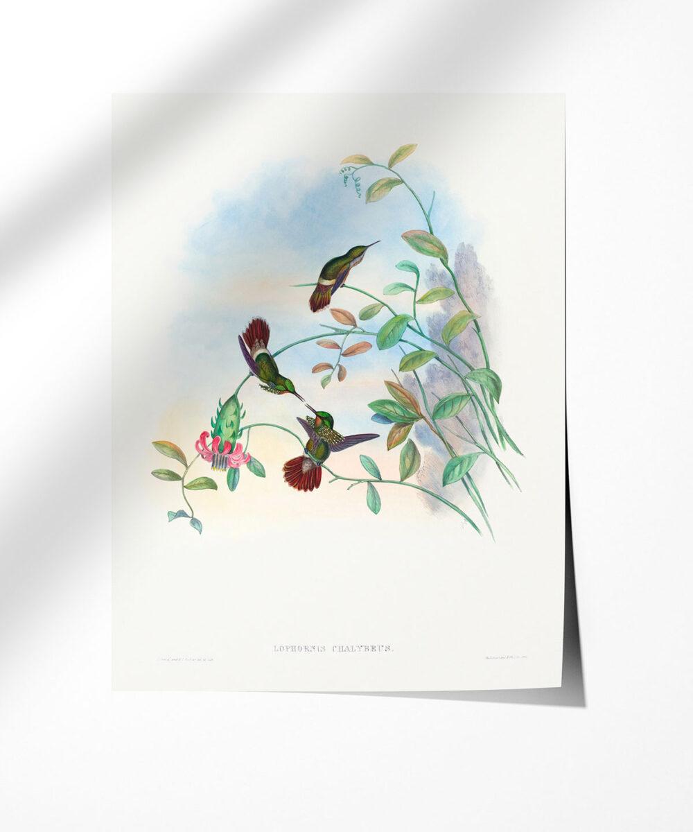Festive-Coquette-Poster-Photopaper-Duwart