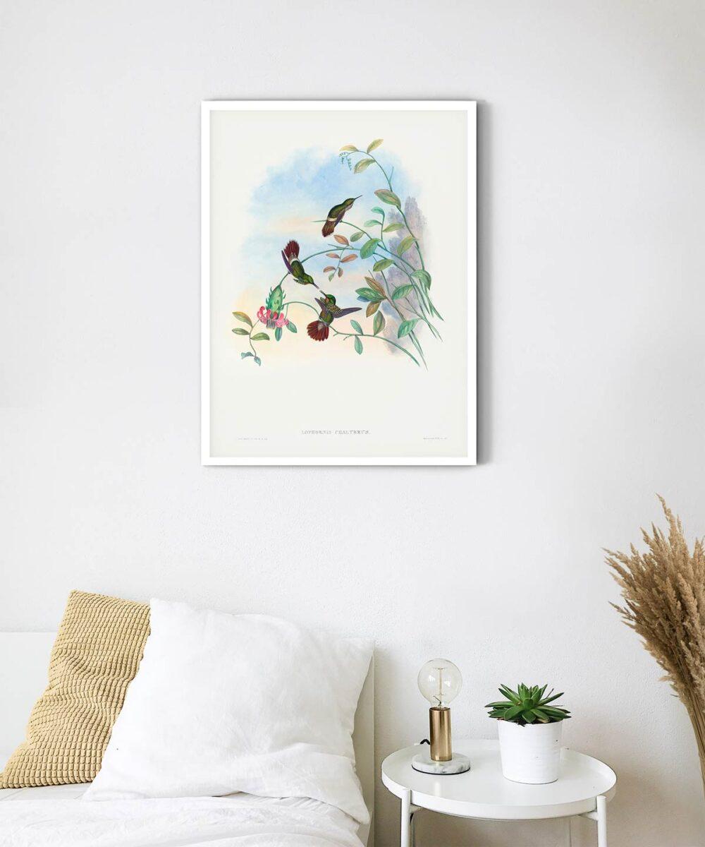 Festive-Coquette-Poster-White-Framed-on-Wall-Duwart