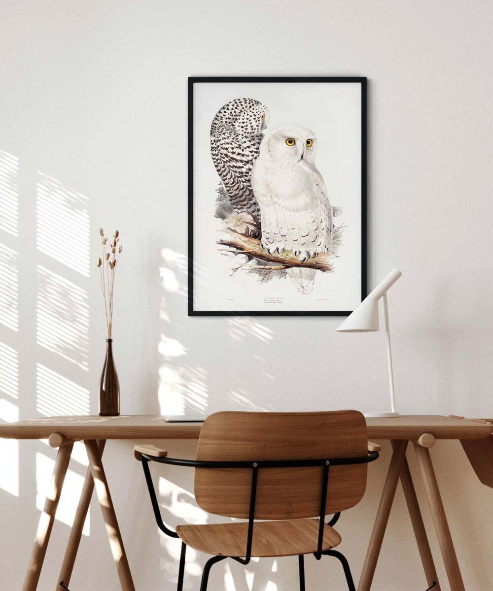 Snowy-Owl-Poster-Black-Framed-Duwart
