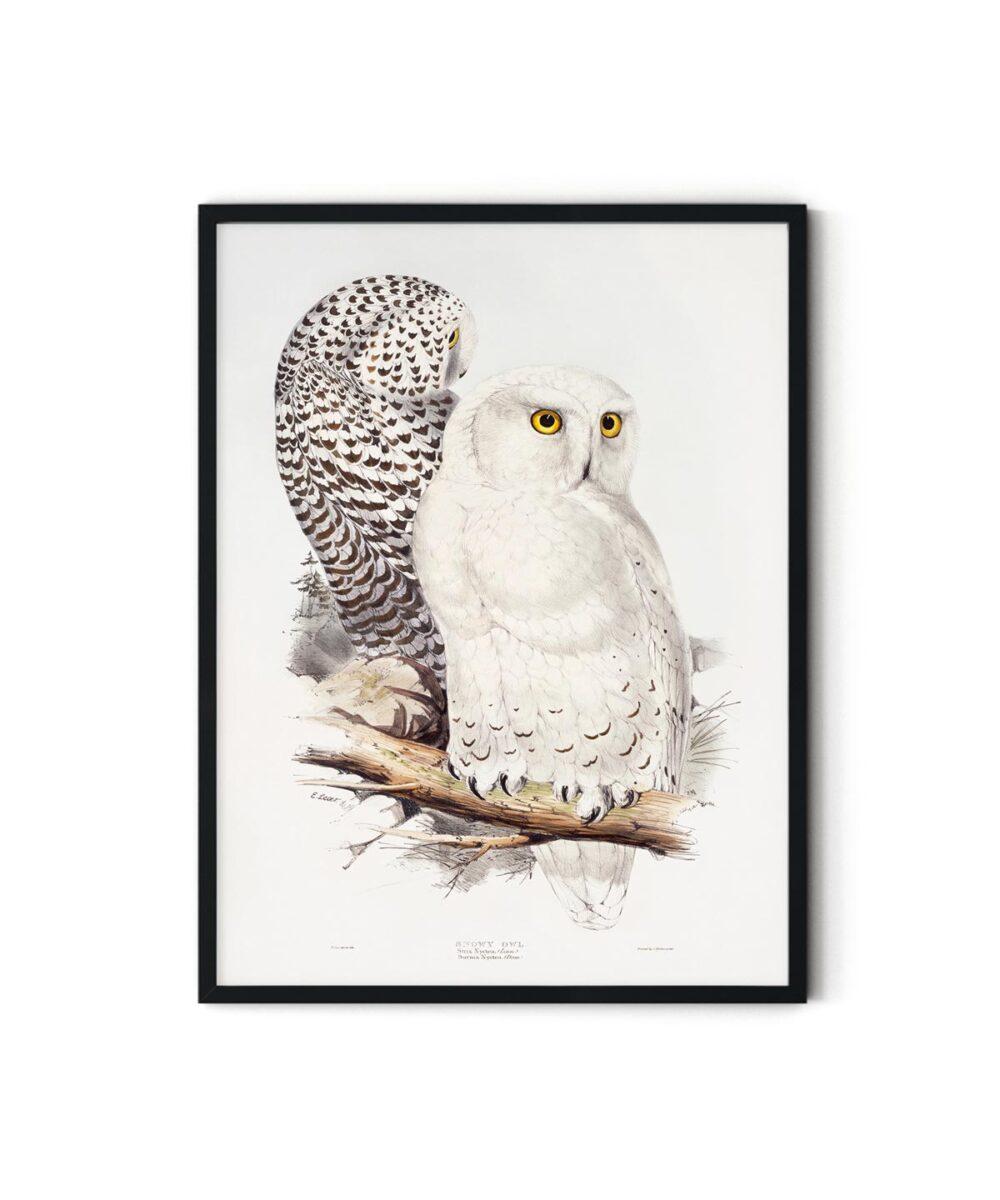 Snowy-Owl-Poster-Duwart