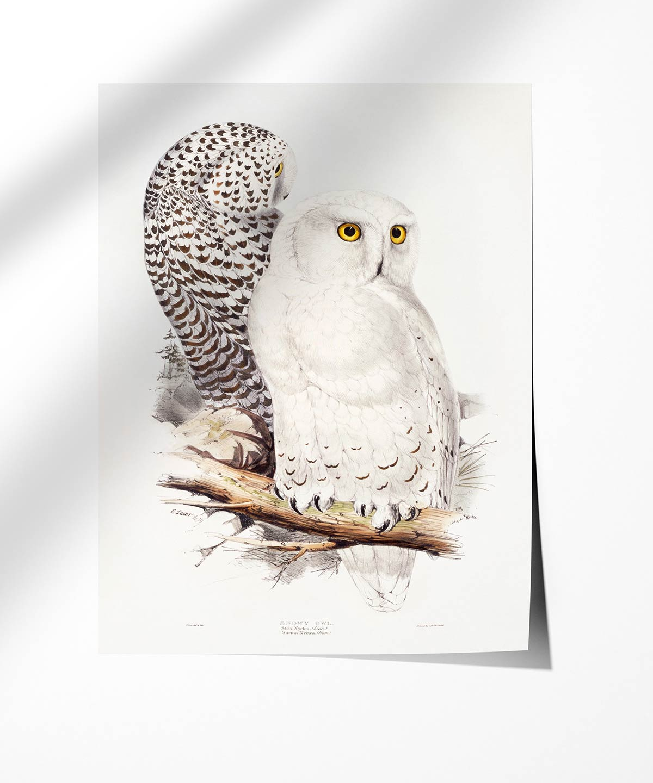 Snowy-Owl-Poster-Photopaper-Duwart