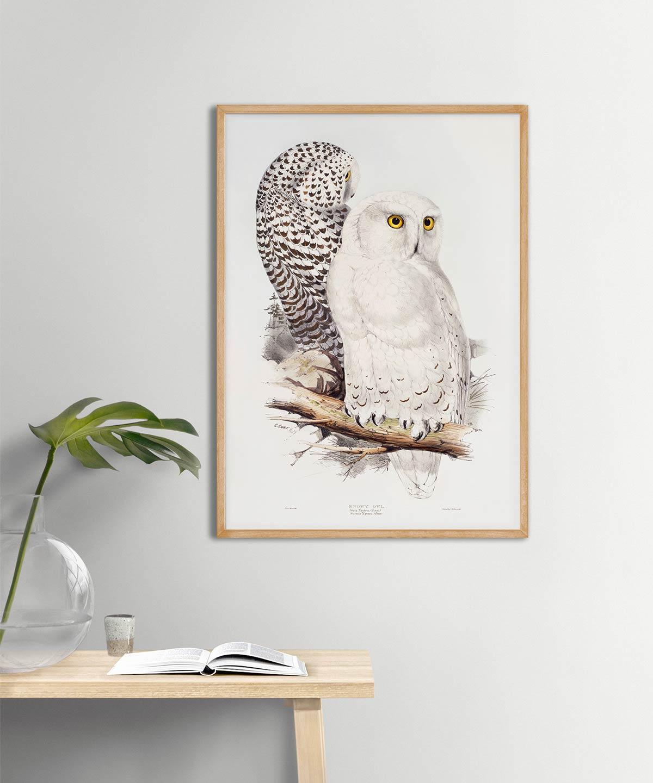 Snowy-Owl-Poster-Wooden-Frame-Duwart